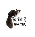 ハングルをしゃべる猫(個別スタンプ:26)
