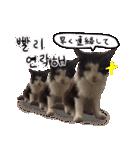 ハングルをしゃべる猫(個別スタンプ:27)