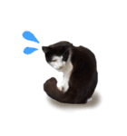 ハングルをしゃべる猫(個別スタンプ:29)