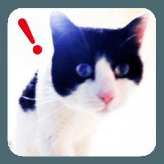 猫のビックリちゃん