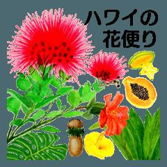 ハワイの花便り