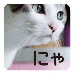[LINEスタンプ] 猫のトラッシュちゃん (1)