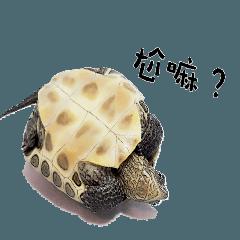 Little Little Turtle