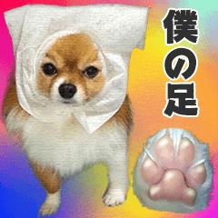 [LINEスタンプ] 愛犬マロンの肉球【写真】の画像(メイン)