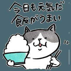 ぽっちゃり猫太郎