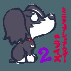 ミニチュアシュナウザーのライズちゃん 2
