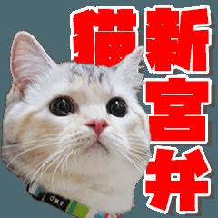 新宮弁LINEスタンプ 猫編