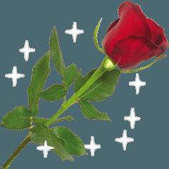 バラ、梅、桜、菜の花、たんぽぽの写真・改