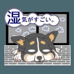 梅雨/雨風の季節に使えるコーギーcorgi4
