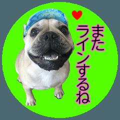 【イヌ写真】フレブルのつぶやき