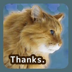 猫のちゃぶちゃん