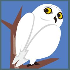 白福籠(シロフクロウ)