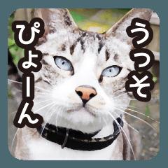 悪気のない野良猫たち