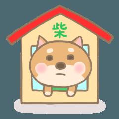 [LINEスタンプ] かわいい柴犬。 (1)