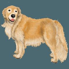 [LINEスタンプ] 優しい犬!2毎日使える基本セット