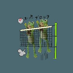 モカガエルのバレーボール