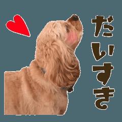 わんこ(アメコカ)すたんぷ