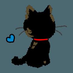 I am Sachi☆LOVE☆かわいい猫