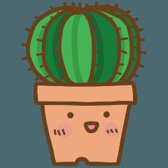 多肉植物と植木鉢