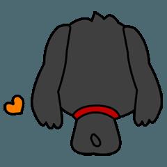 I am Midge☆LOVE☆かわいい犬