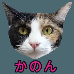 三毛猫のカノン