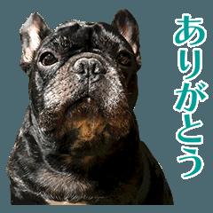 フレブルのトイくん12【ありがとう・おめ】