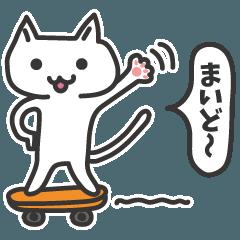 普通の白いネコ