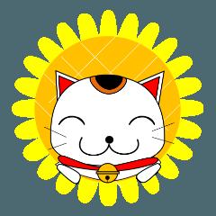 招き猫のねねこ 夏編(暑中お見舞いetc)