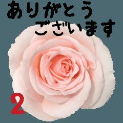 バラの花と敬語メッセージ
