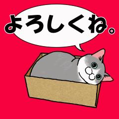 動く!猫のお祝いと感謝と了解