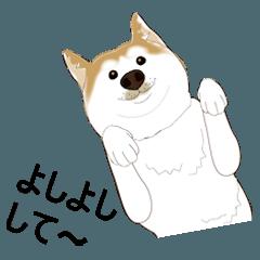 かわいい柴犬ちゃん