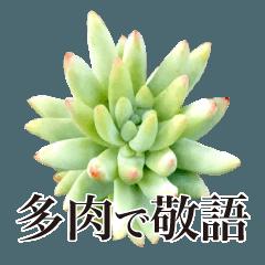 多肉植物 敬語スタンプ