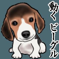 [LINEスタンプ] 動く!ビーグル犬
