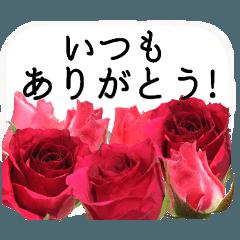 感謝の気持ちに花を♪バラ