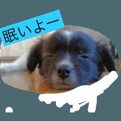 赤ちゃん犬