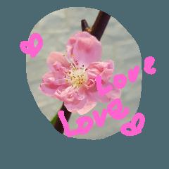 ♡かわいいお花♡8
