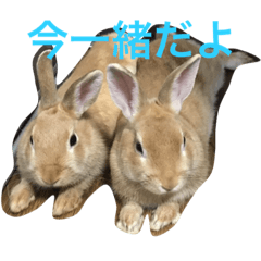 うさぎウサギ兎!