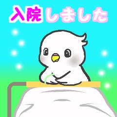 Snowちゃん病院へ行く 2