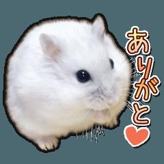 ハムスター☆だいふく ver.3