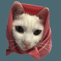 うちの猫スタンプ(シンたん)
