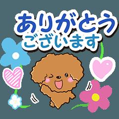 お花とトイプードル【敬語編】