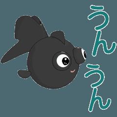 まるで出目金(黒い金魚)
