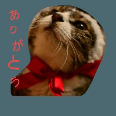 猫スタンプ!