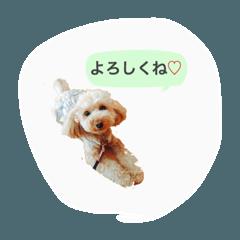 Megu stamps