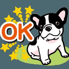 わんこ日和 フレンチブルドッグの仔犬