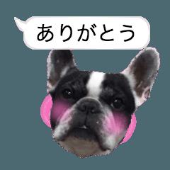 [LINEスタンプ] 吹き出しフレンチブルドッグのココ (1)