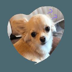 私の犬のココのスタンプ