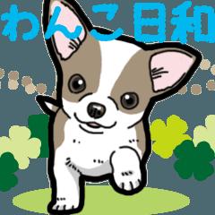 [LINEスタンプ] わんこ日和 チワワの仔犬