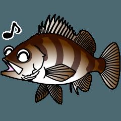 お魚スタンプ★メバルのこたろうクン