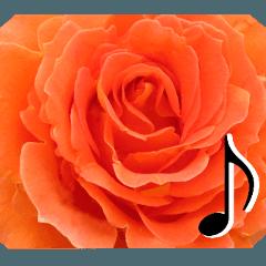 感謝の気持ちに花を♪バラ・セット